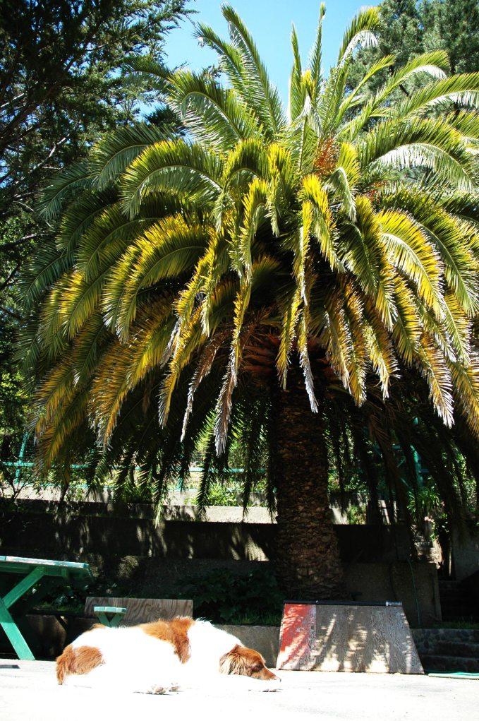 satchel_palmtree